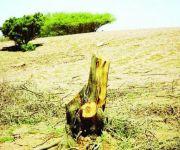 «الزراعة» تعاقب مخالفين للاحتطاب بمليون ريال وتضبط 117 طناً