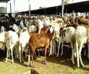 «الزراعة»: حاجة السوق المحلي والاستهلاك في المواسم للمواشي أوقف التصدير