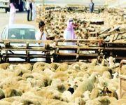 «الزراعة» تمنع رسمياً استيراد المواشي الحية من إيران