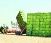 دراسة تتوقع ارتفاع أسعار الأعلاف واللحوم الحمراء مع انتهاء زراعة الأعلاف الخضراء