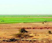 السودان يعلن اتفاقية استثمارية مع المملكة لزراعة مليون فدان خلال 99 عاماً
