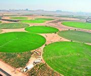 مختصون: التوجه للصناعات الغذائية الحل الوحيد للشركات الزراعية لتعويض وقف الأعلاف