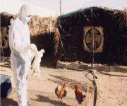 «البيئة» تعلن عن تسجيل إصابة بانفلونزا الطيور في الرياض
