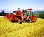 ارتفاع صادرات الشعير الأوكراني للمملكة في يوليو 55 %