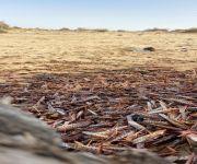 مكتب وزارة البيئة والمياه والزراعة يكافح أسراب الجراد
